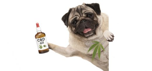 Comfort Your Dog With CBD