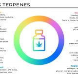 How to Vape Terpenes