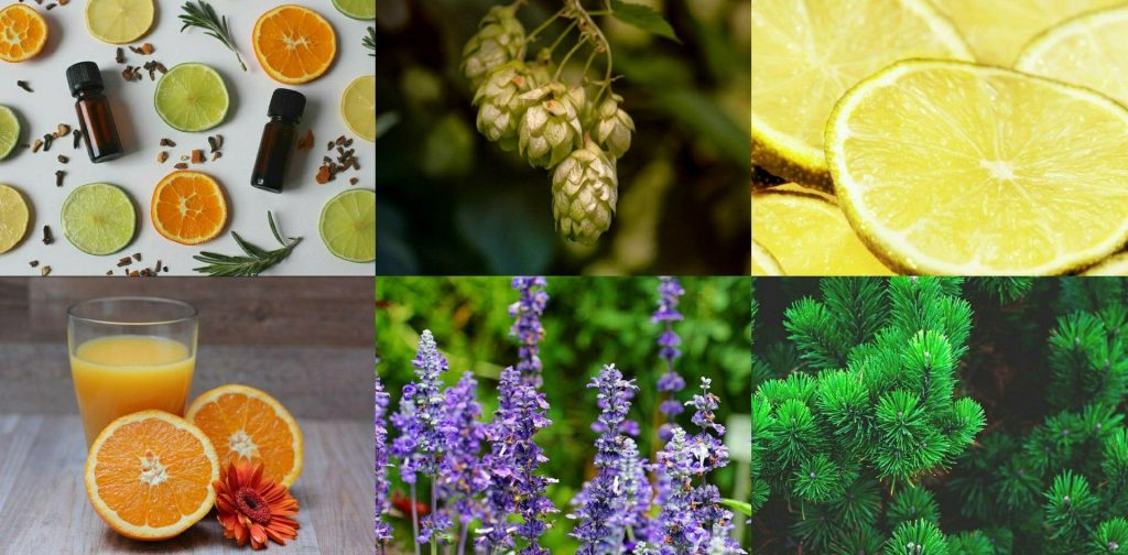 Therapeutic Effects Of Terpenes To Improve Health