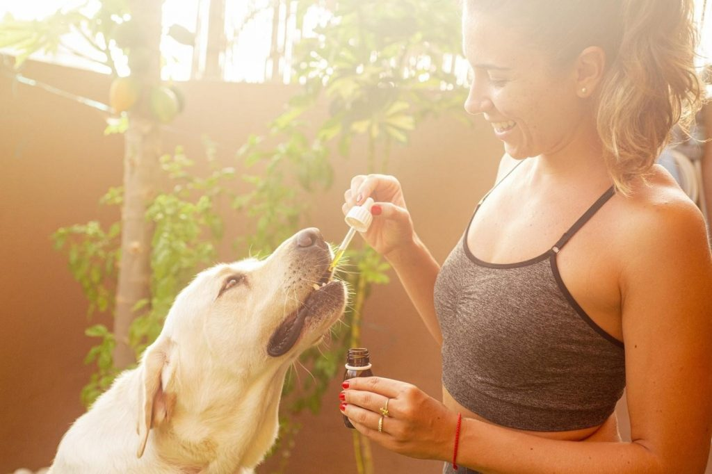 Try CBD For your Baby Dog