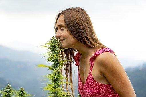 Woman, Smelling, Marijuana, Hemp